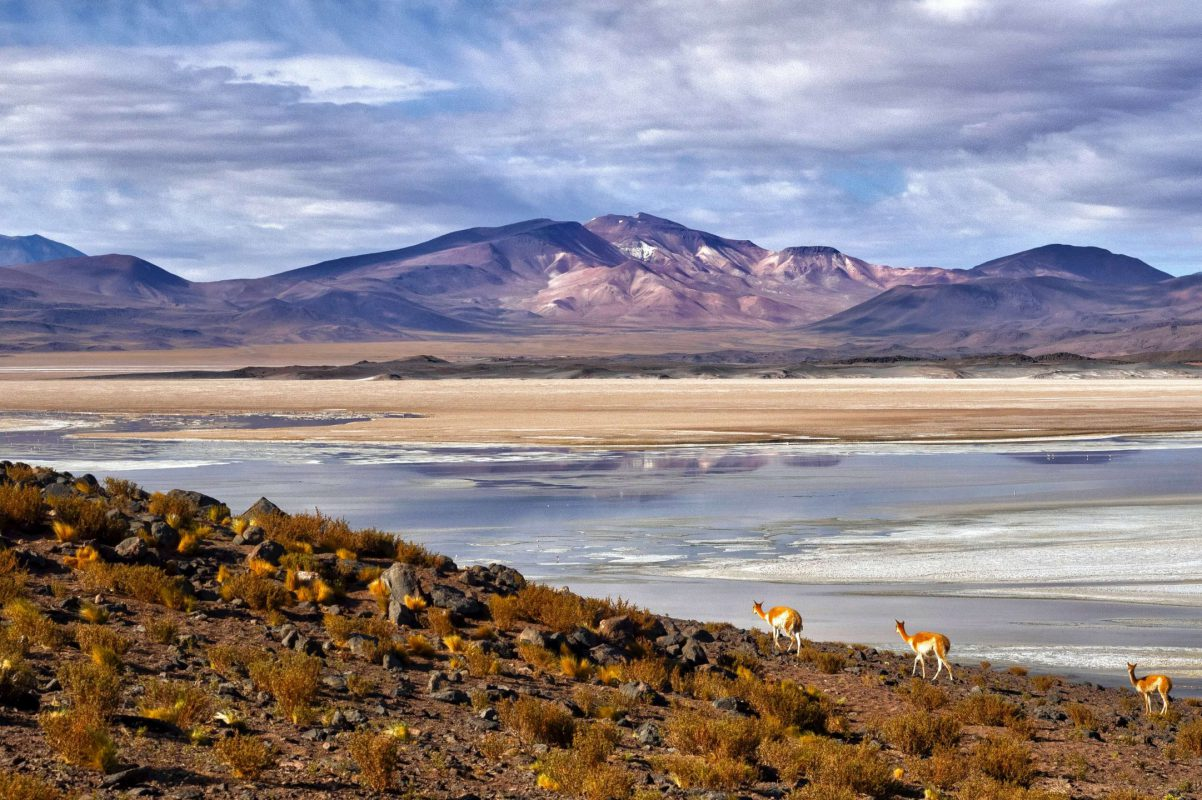 Andes Nativa Tour Atacama