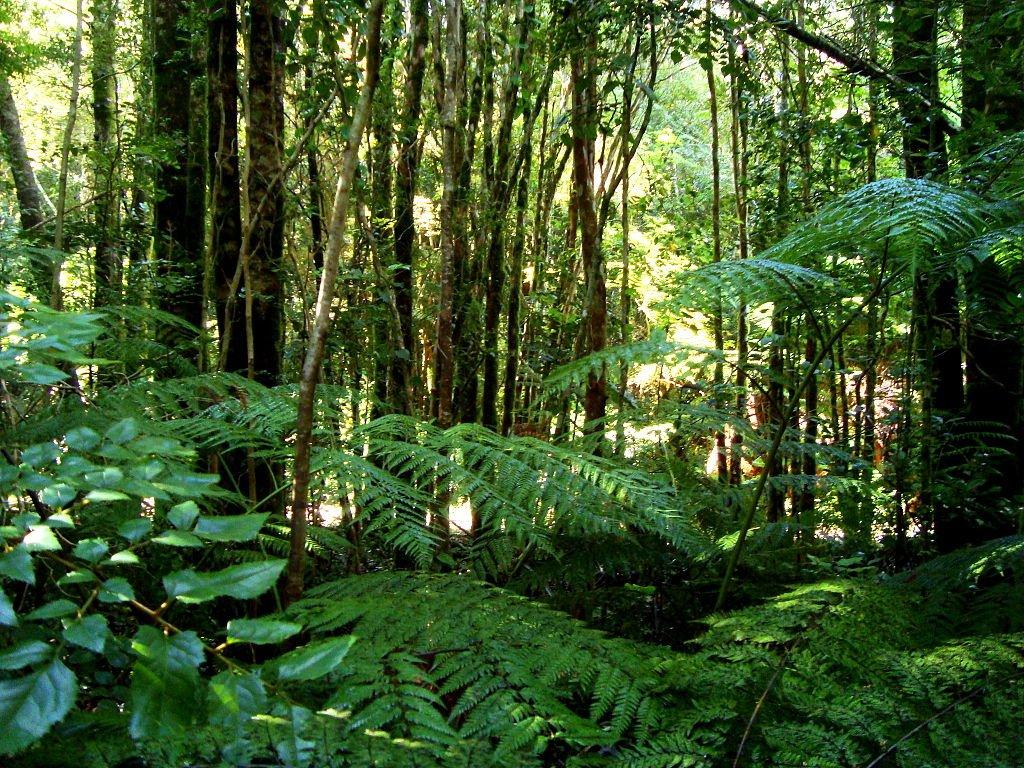 Valdivian Temperate Rainforest in Chile