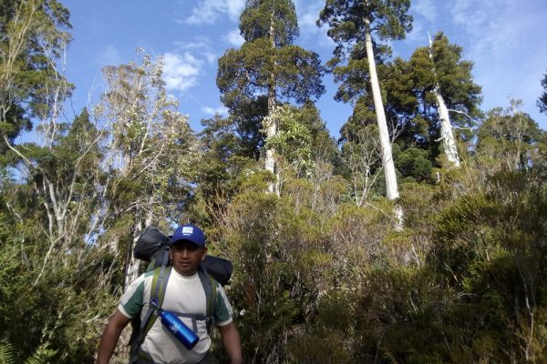 Trekking Tour inside a native forest in Chile