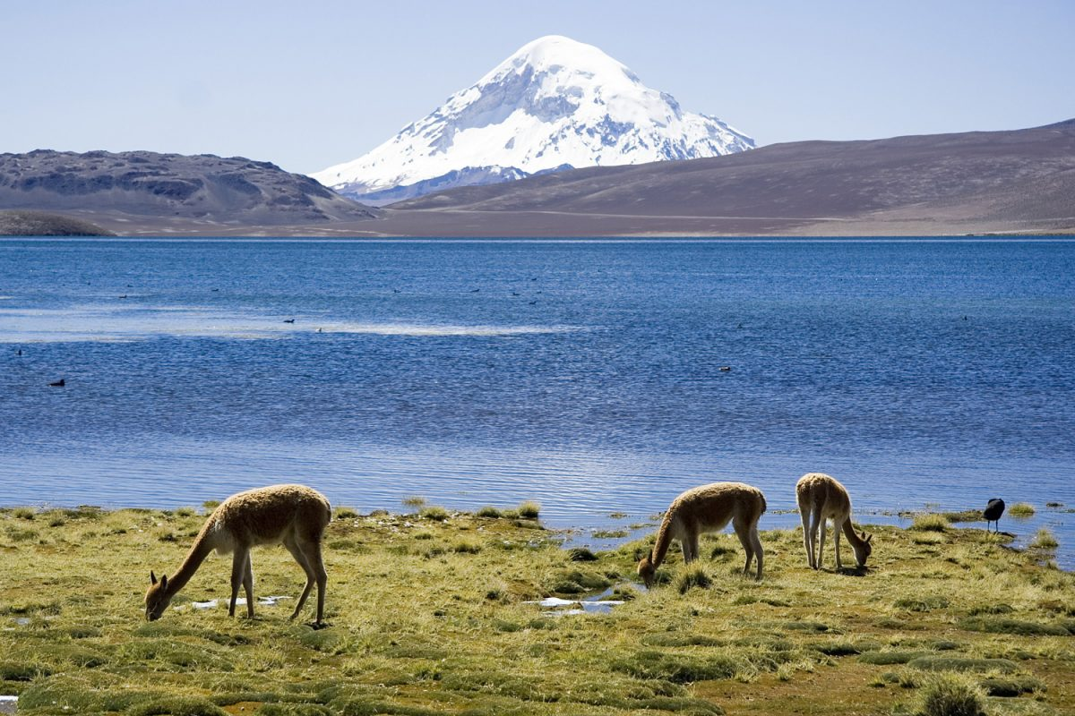 Lauca National Park Chungara Lake and Volcan Sajama Chile